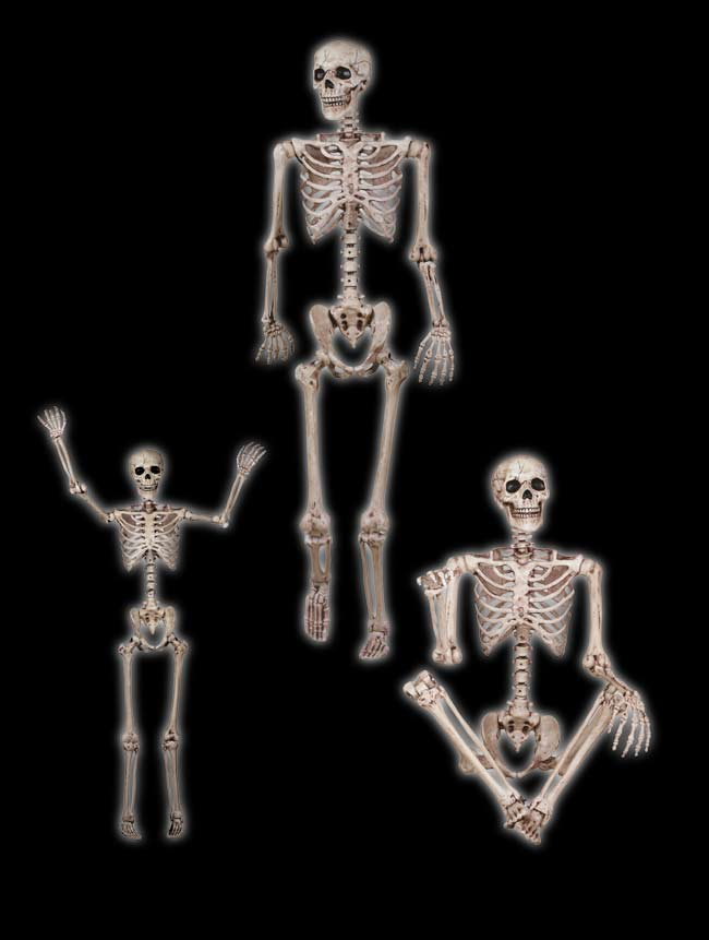 Realistic Pose N Stay Skeleton