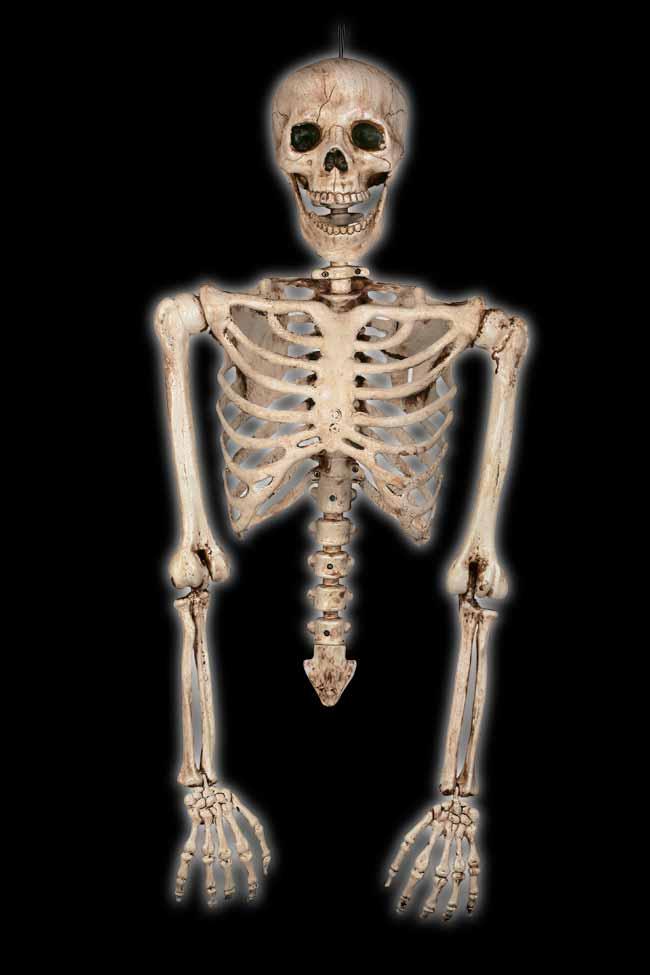 Realistic Skeleton Torso
