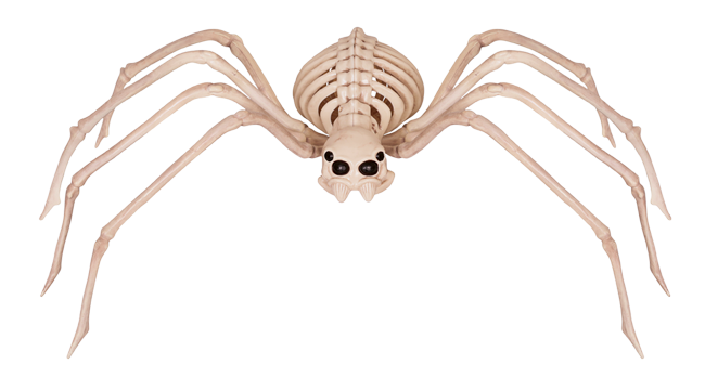 Crazy Bonez Skeleton Spider