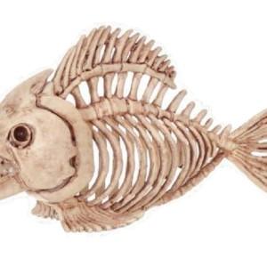 fish_18367