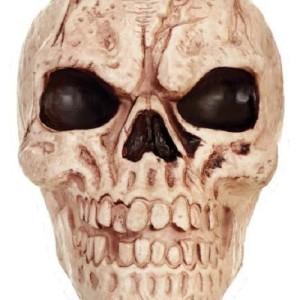skull_18664